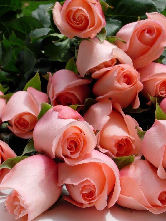 Flor rosa em tons claros