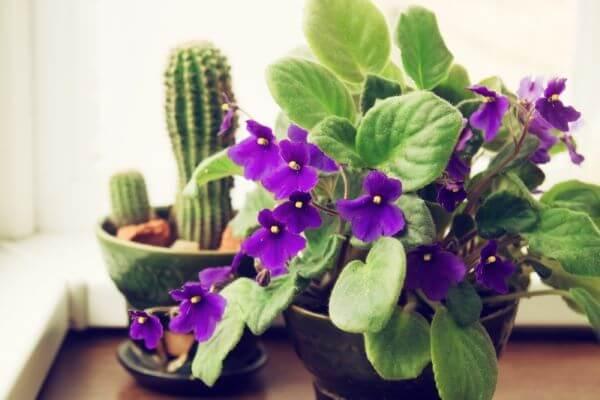 Violetas no vaso de casa moderna