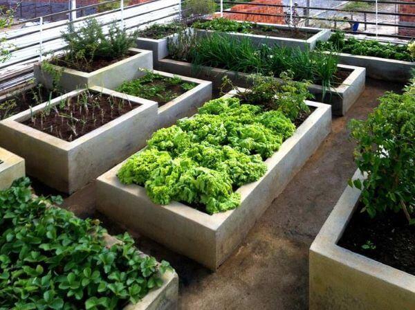 Horta no quintal com alface, rúcula e temperos variados