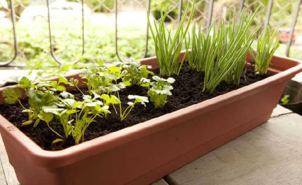 Canteiro com sementes de plantas para ter uma horta em casa