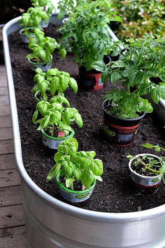 Horta no quintal com sementes variadas
