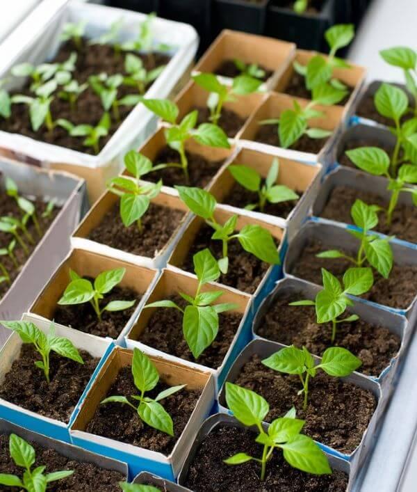 Aprenda como germinar as sementes para ter uma horta no quintal