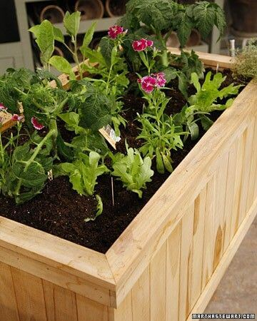 Use caixas de madeira para fazer uma horta no quintal