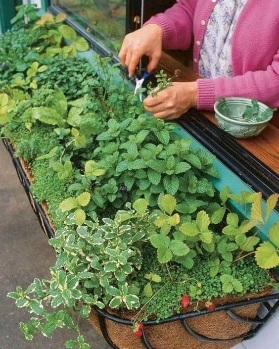 A horta no quintal é prática e fácil de cuidar