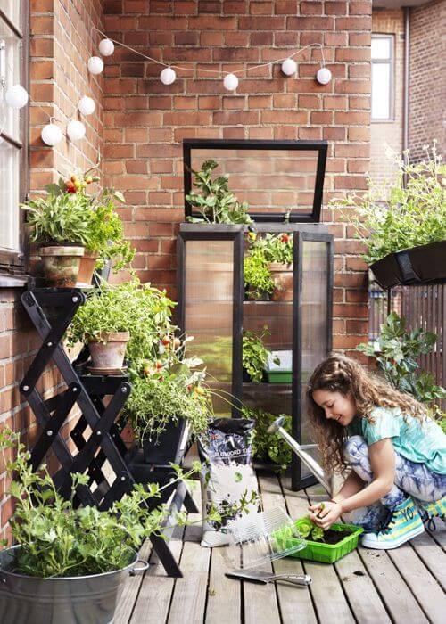 Dicas de como fazer uma horta no quintal de casa