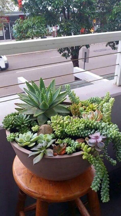 Jardim com vaso de plantas e echeveria