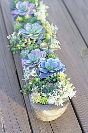 Vaso com suculentas para jardim moderno