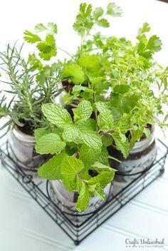 Coloque hortelã, orégano e outros temperos na sua horta no quintal