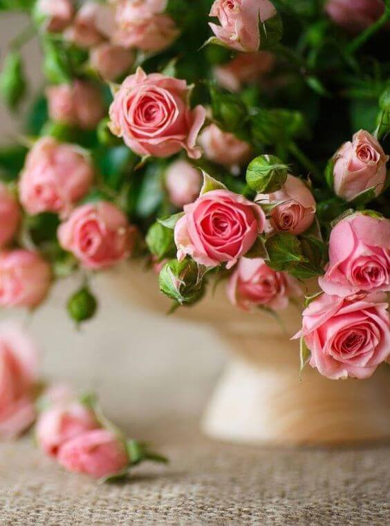 A mini rosa é delicada para compor lindos vasos decorativos