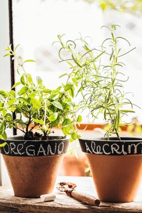 Escolha vasos bonitos para ter uma horta no quintal