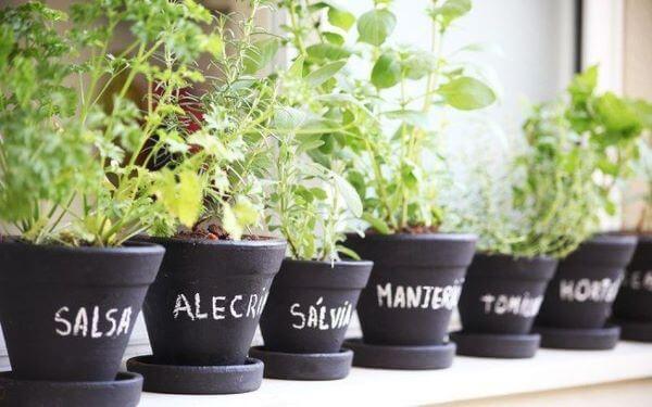 Coloque o nome das plantas nos vasos da sua horta no quintal