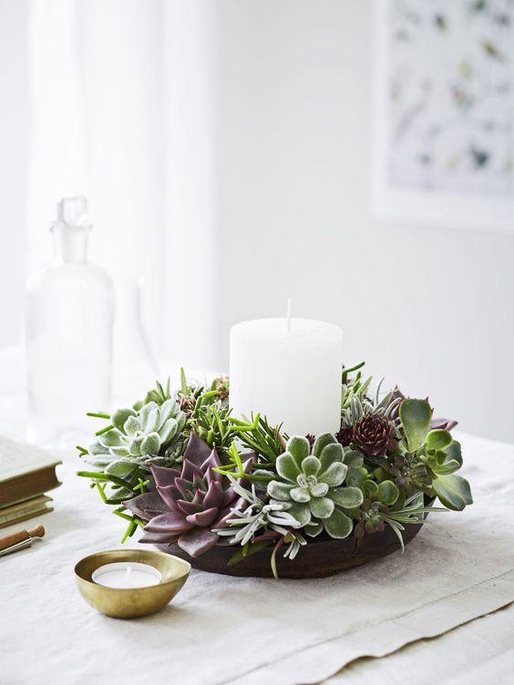 Decore sua casa com a echeveria