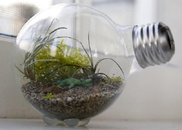 A estrutura de uma lâmpada pode ser usada no cultivo do terrário de suculentas