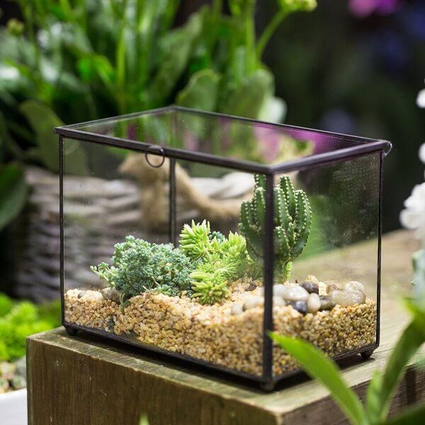 A estrutura do aquário foi usada para cultivo do terrário de suculentas
