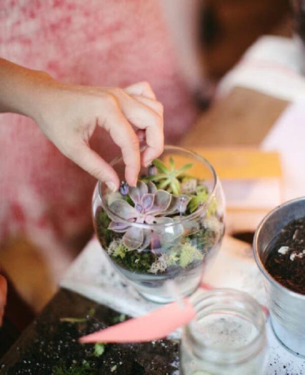 Como fazer terrário de suculentas em casa
