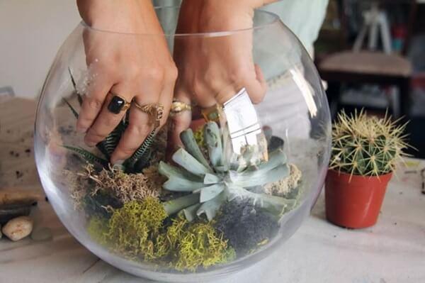 Como montar um terrário de suculentas no cachepot de vidro