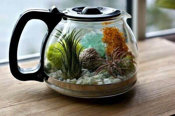 O mini terrário de suculentas é cultivado dentro da cafeteira