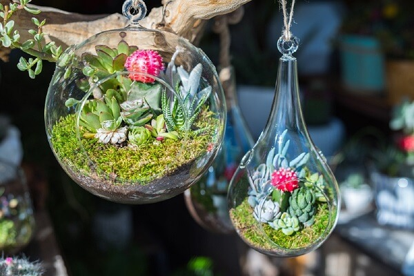 O terrário de suculentas em vidro ficam suspensos no ambiente