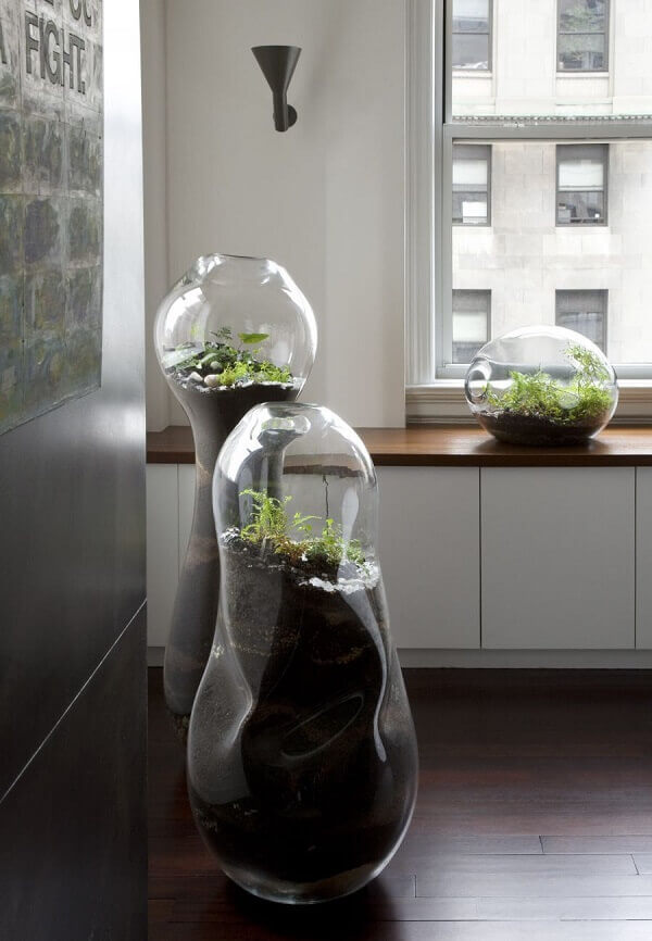 Que tal cultivar um terrário de suculentas e cactos gigante em casa?