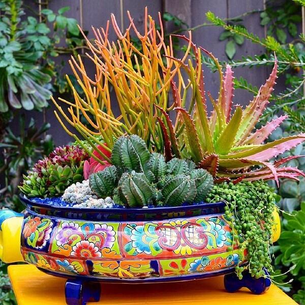 Que tal um vaso colorido para cultivar seu terrário de suculentas?
