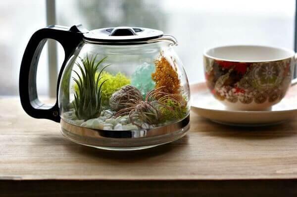 Reutilize recipientes de casa para montar seu terrário de suculentas
