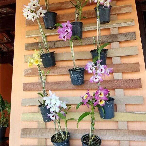 A floreira de parede de madeira sustenta lindas orquídeas