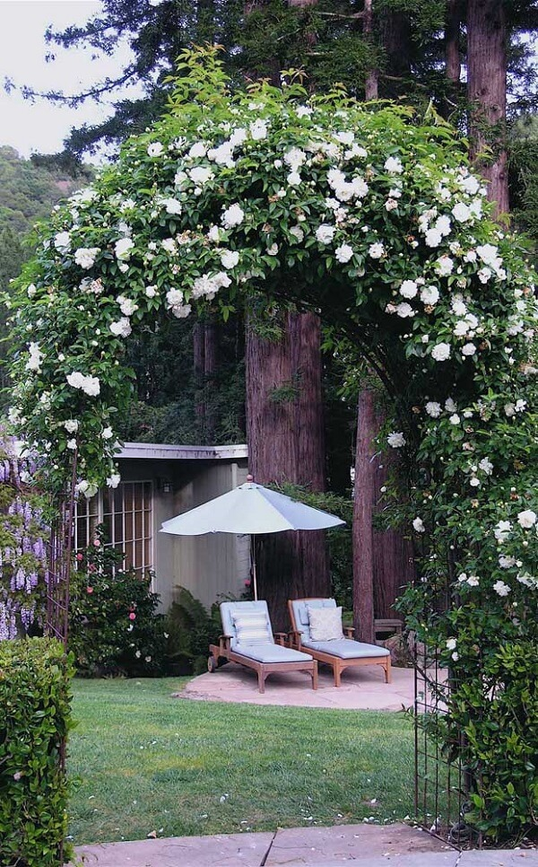 A rosa trepadeira branca confere charme ao jardim da cas