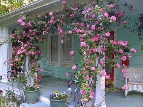 A rosa trepadeira decora a fachada da casa