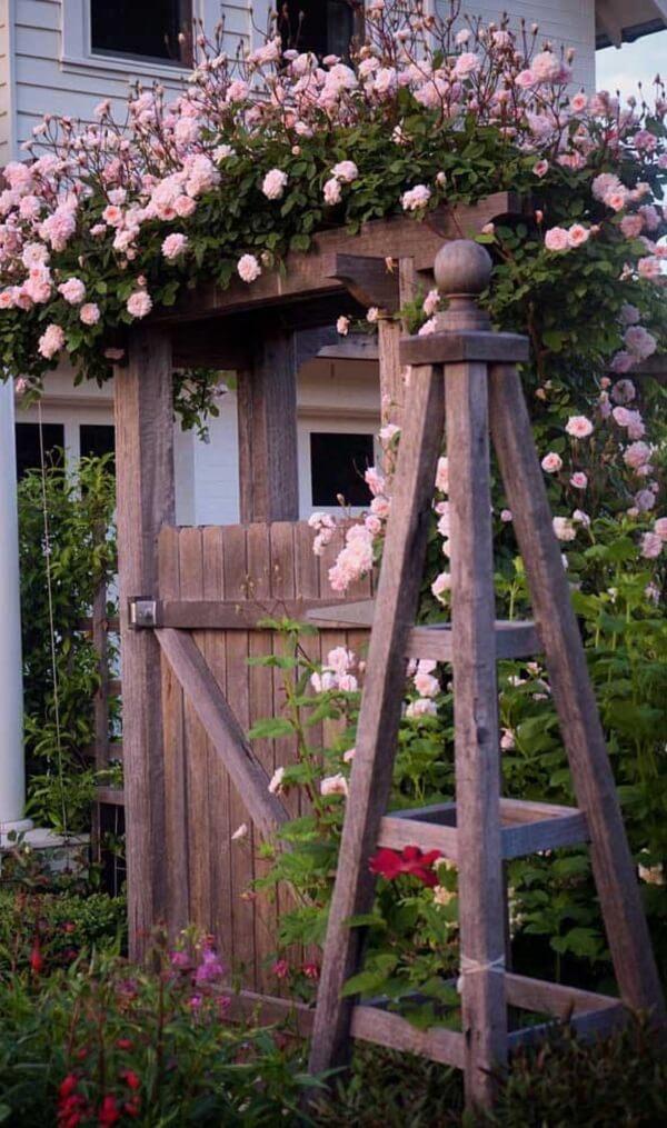 A rosa trepadeira se destaca sobre o caramanchão rústico