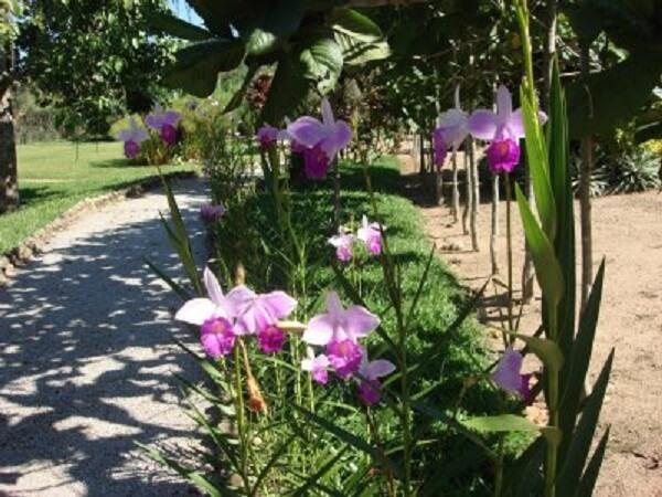 Calçada alegre com orquídea bambu cores