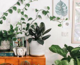 Conheça as melhores plantas para decorar a sala