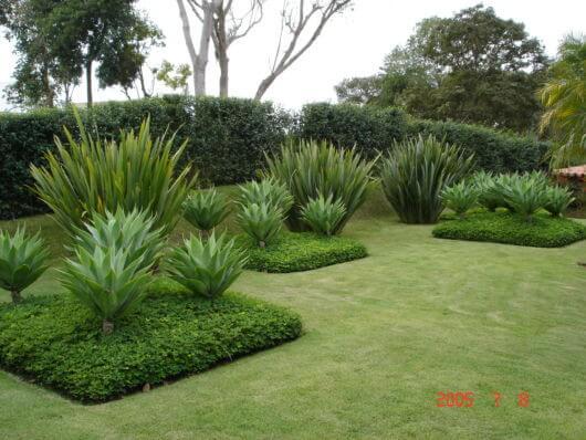 Forme desenhos no jardim com a grama amendoim