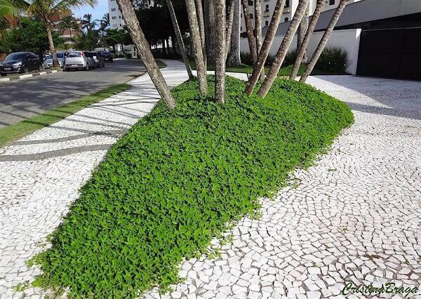 Na calçada a grama amendoim pode ser uma ótima alternativa