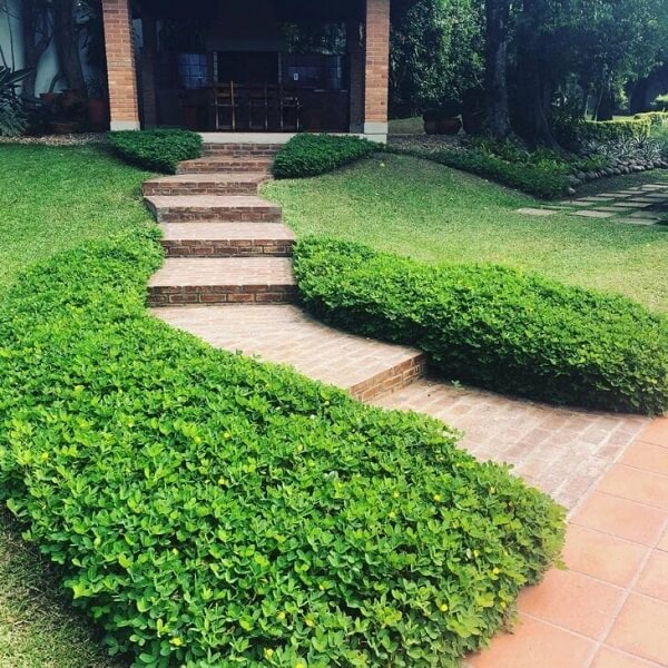O jardim com grama amendoim se destaca na fachada da casa