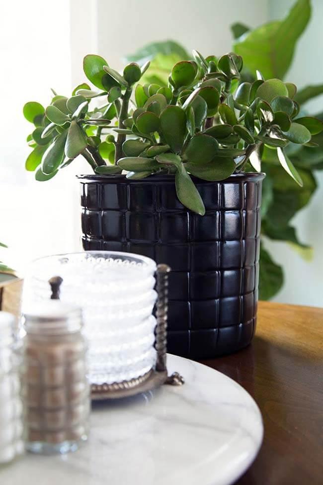 Decoração com planta jade