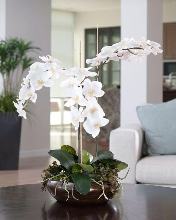 Orquídea bambu branca