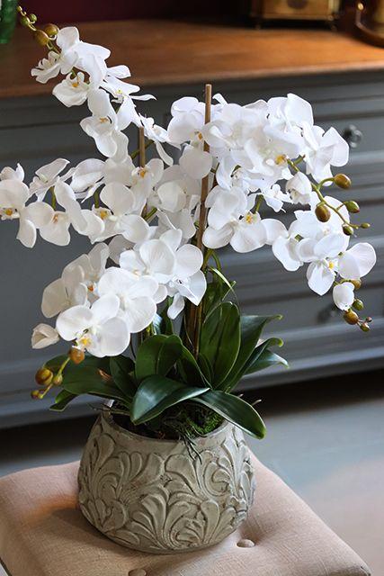 Vaso com orquídea branca