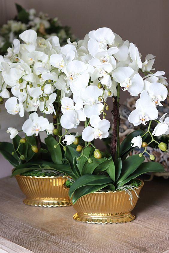 Orquídea branca com vaso dourado moderno