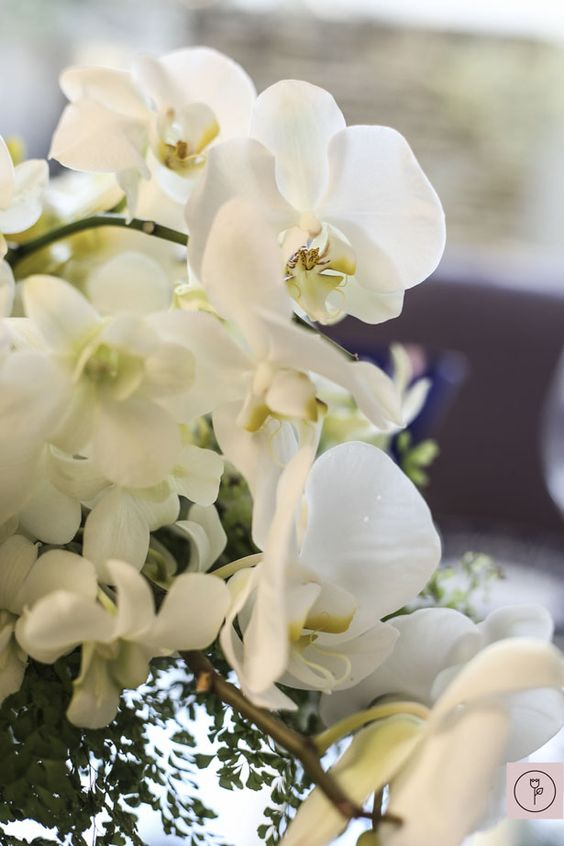 Flor orquídea branca sofisticada