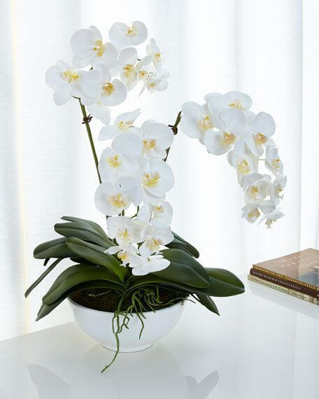Orquídea branca para decorar vasa moderna
