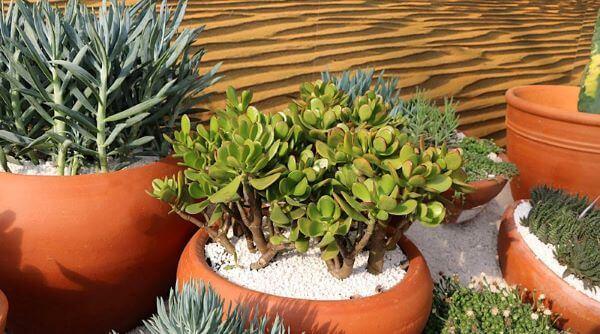 Jardim com plantas e folhagens e vaso de planta jade