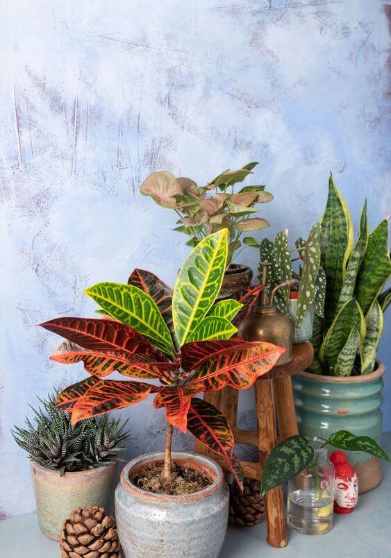 Plantas na decoração de casa