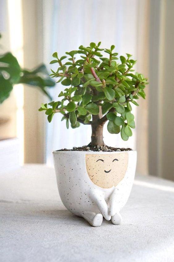 Vaso cerâmica com planta jade