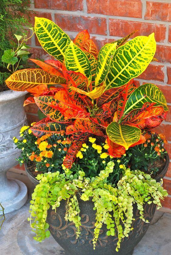 Vaso de croton e flores