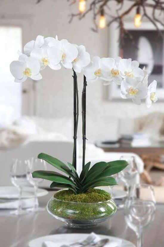 Sala de estar decorada com vaso de orquídea branca