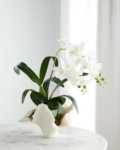 Orquídea branca delicada na decoração
