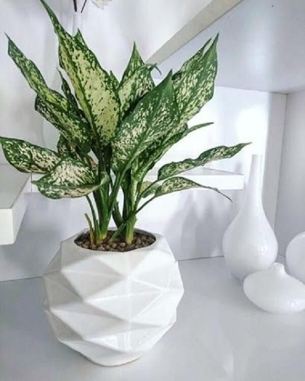 A Aglaonema é uma ótima planta para purificar o ar da casa
