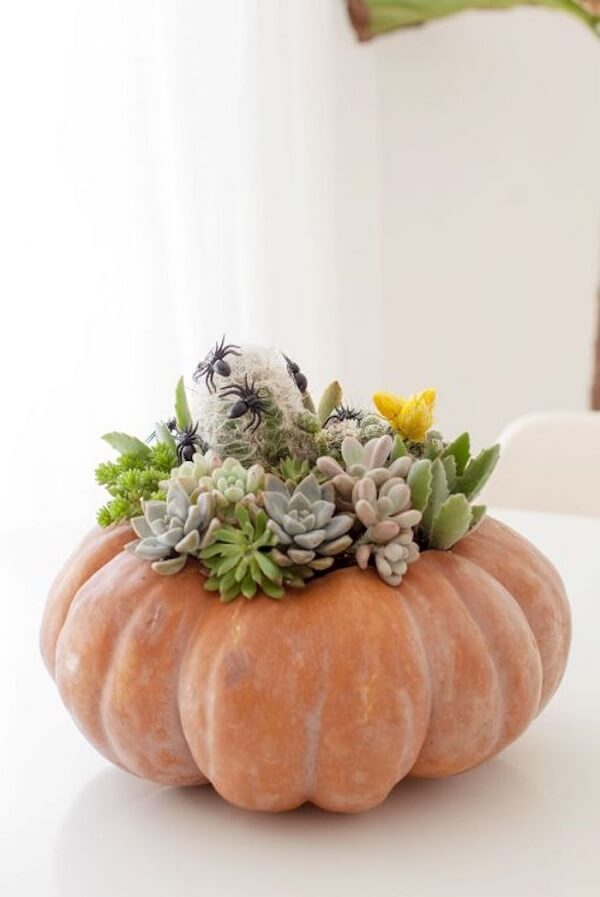 The halloween pumpkin was used as a vase for succulents