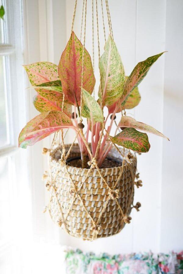 A planta Aglaonema ficou suspensa na decoração desse ambiente