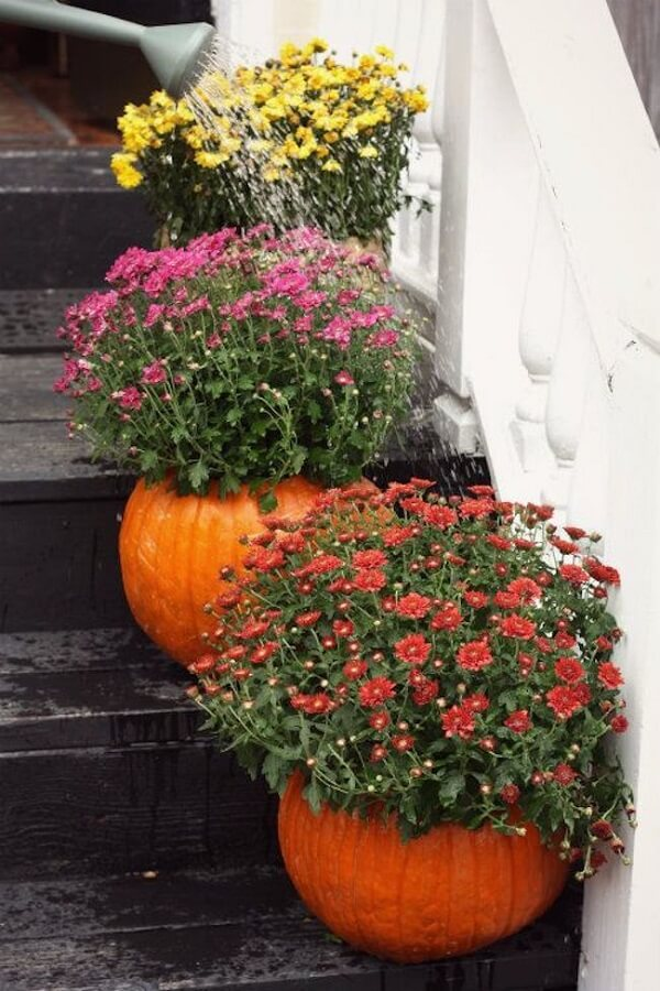 Decoration with halloween pumpkin with flowers in the outdoor area